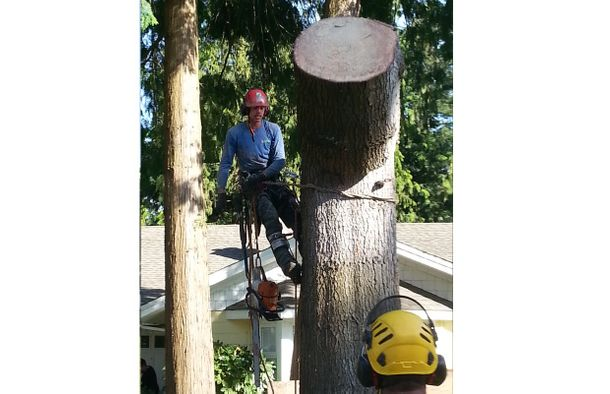man working in a tree