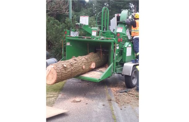 tree removal work