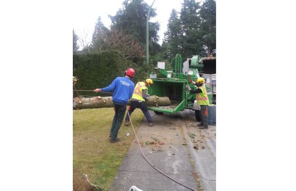 Putting tree in chipper