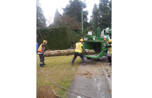 Two men placing tree in chipper