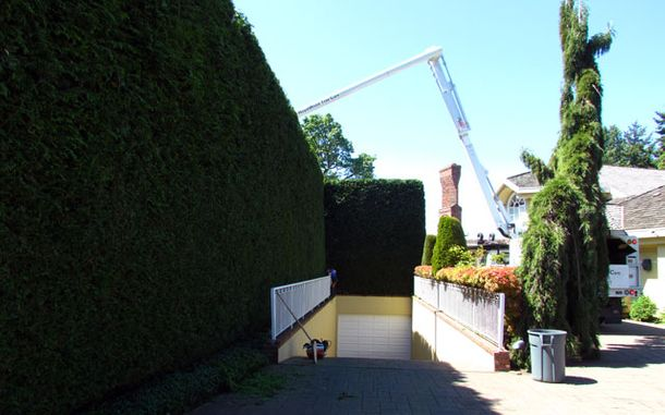 Pruning hedges